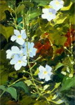 Flower-painting-704
